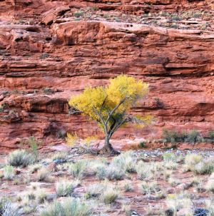 Glen Canyon Colors